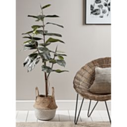 Faux Potted Rubber Plant | Cox and Cox