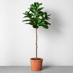Faux Fiddle Leaf Plant in Terracotta Pot - Hearth & Hand™ with Magnolia   Target