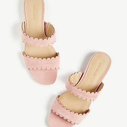 Jean Scalloped Flat Suede Sandals   Ann Taylor   Ann Taylor (US)