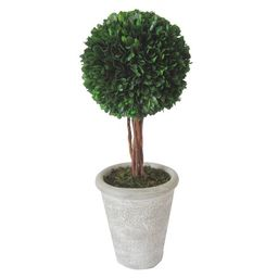 Preserved Boxwood Topiary - Large - Smith & Hawken™   Target