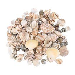 Aunifun 80PCS Sea Shells Mixed Beach Seashells, Colorful Natural Seashells Perfect Accents for Ca... | Amazon (US)
