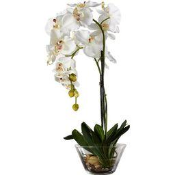 Phalaenopsis Silk White Orchid in Glass Vase | Wayfair North America