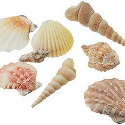 "Creative Hobbies Sea Shells Mixed Beach Seashells - Various Sizes up to 2"" Shells -Bag of Approx.... | Amazon (US)"