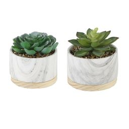 2 Piece Marble/ Wood Base Desktop Succulent Plant in Pot | Wayfair North America