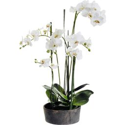 Faux Phalaenopsis Orchids with Clay Pot | Wayfair North America