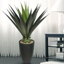 Tall High End Giant Aloe Floor Plant in Planter | Wayfair North America