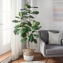 6' Faux Fiddle Leaf Tree in Starter Pot by Valerie   QVC