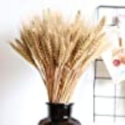 Wedding Decorations Dried Wheat Sheaves,100pcs Natural Wheat Bouquet Bunch Stalk Bundle,Bride and... | Amazon (US)