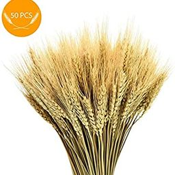 AQUEENLY Wheat Stalks, 50 PCS Natural Dry Wheat Decor for Christmas Wedding Home Office Decoratio... | Amazon (US)