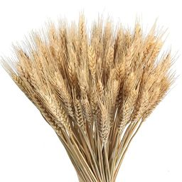 GTIDEA Large Golden Dried Natural Wheat Sheave Bundle Premium Fall Arrangements Full Wholesale DI... | Amazon (US)