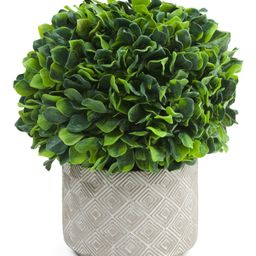 14in Jasmine Plant In Cement Pot | TJ Maxx