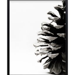 """""""Pine Cone"""" - Photography Limited Edition Art Print by Alexis Arnold. 