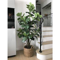 Fiddle Leaf Fig Tree with Basket | Wayfair North America