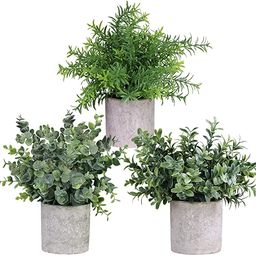 Winlyn Mini Potted Plants Artificial Eucalyptus Boxwood Rosemary Greenery in Pots Faux Potted Her... | Amazon (US)