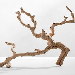 Dried Grapewood Branch | Pottery Barn (US)