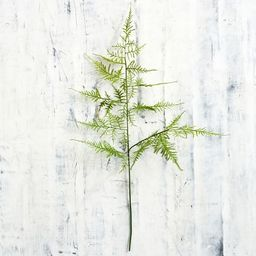 Faux Asparagus Fern Stem | Pottery Barn (US)