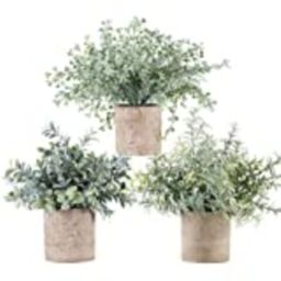 Winlyn Set of 3 Mini Potted Artificial Eucalyptus Plants Plastic Fake Green Rosemary Plant for Ho... | Amazon (US)
