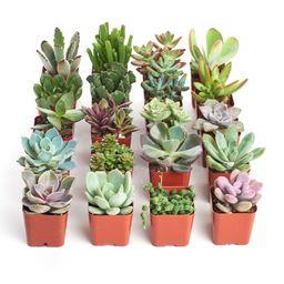 Home Botanicals Unique Succulent (Collection of 20) | Walmart (US)