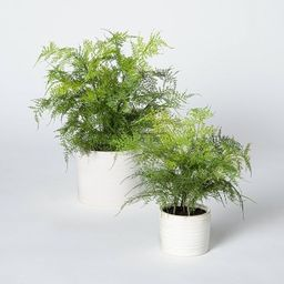 Artificial Fern Plant in Pot Green/White - Threshold™ designed with Studio McGee   Target
