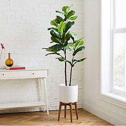 west elm Artificial Fiddle Leaf Fig Plant   John Lewis UK
