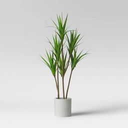 """65"""" Dracaena Plant in Pot - Project 62™ 