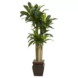 Nearly Natural 4.5' Cornstalk Dracaena Silk Plant with Vase (Real Touch) | Target