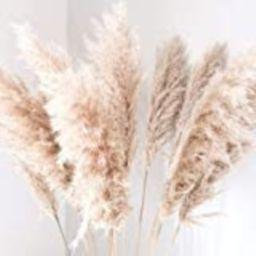 Bundle (3) Fluffy Natural Dried Pampas Grass   Home Decor   BOHO wedding   Fluffy Large Pampas Grass   Amazon (US)