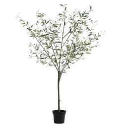 Faux Potted Olive Tree, XL | Pottery Barn (US)