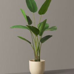 Faux Bird of Paradise | The Sill