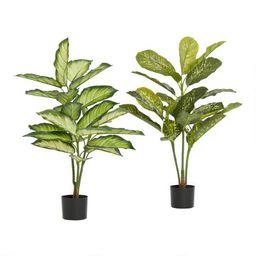 Faux Dieffenbachia Plants Set of 2   World Market