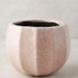 Ridged Terracotta Pot   Anthropologie (US)
