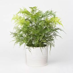 Artificial Fern Plant in Pot Green/White - Threshold™ designed with Studio McGee | Target