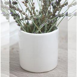 Spiree Ceramic Pot Planter   Wayfair North America