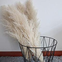 Pampas grass, naturally dried - plans wedding flower bunch for home decorations from wedding tren... | Amazon (UK)
