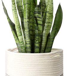 Mkono Cotton Rope Plant Basket Modern Indoor Planter Up to 11 Inch Pot Woven Storage Organizer wi... | Amazon (US)
