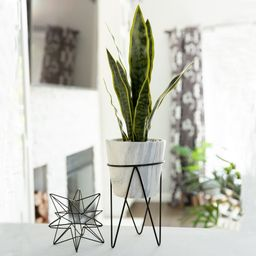 1.75FT Snake Plant in Marble on Metal Stand - ONE-SIZE (ONE-SIZE) | Overstock