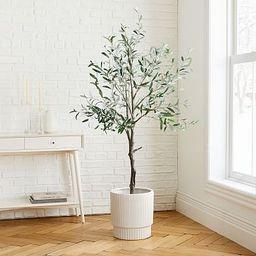 Olive Tree + Large White Fluted Planter Bundle | West Elm (US)