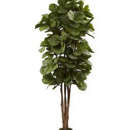 6' Fiddle Leaf Fig Tree   Macys (US)