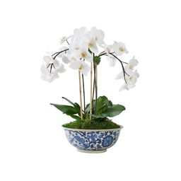 Triple White Orchid in Traditional Floral Bowl   Caitlin Wilson Design