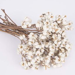 Tallow Berries Dried, Natural Stem Wedding Floral Décor | Amazon (US)