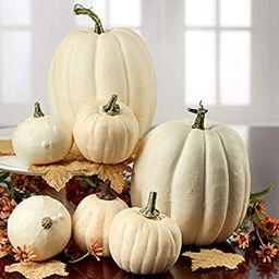 Factory Direct Craft Package of 7 Harvest Off White Artificial Pumpkins Assortment for Halloween,... | Amazon (US)
