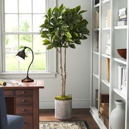 Fiddle Leaf Fig Tree Foliage Plant in Planter Three Posts™ | Wayfair North America
