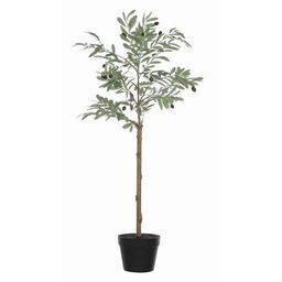 Olive Plant in Pot Bungalow Rose | Wayfair North America
