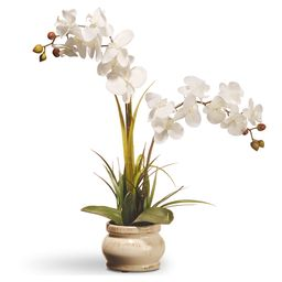 National Tree Company Floral White - Potted White Orchid Arrangement   Zulily
