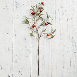 Faux Pomegranate Tree Branch, Red, One | Pottery Barn (US)