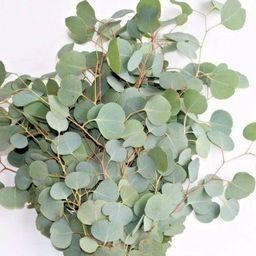 Fresh & Preserved Eucalyptus Silver Dollar Round  Weddings   Etsy   Etsy (US)