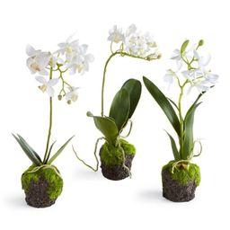 Dendrobium Orchid | Megan Molten