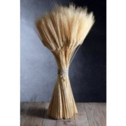 Triticum Wheat Natural 34 Inch   Etsy (US)