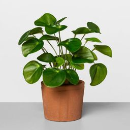 """9"""" Faux Pilea Potted Plant - Hearth & Hand™ with Magnolia 