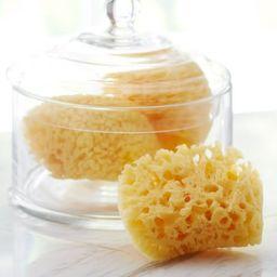 Sea Sponges, Set of 3   Pottery Barn (US)